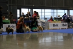 VELISEND UNISON and OTTO DIX DAMGREIP at National dog show in Brno